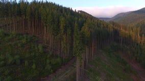砍伐森林 在乌克兰毁坏的森林空中寄生虫视图 股票录像