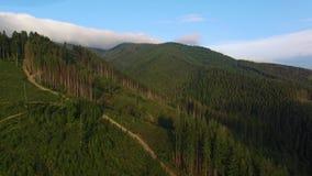 砍伐森林 在乌克兰毁坏的森林空中寄生虫视图 影视素材