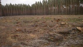 砍伐森林 赤裸一块土地在缩短的树以后的森林里 股票录像