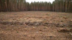 砍伐森林 赤裸一块土地在缩短的树以后的森林里 影视素材