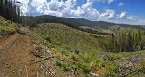 砍伐森林 库存照片