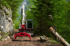 砍伐森林 免版税库存照片