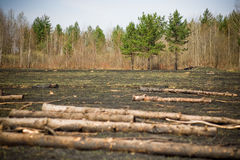 砍伐结构树 免版税库存照片