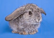 砍兔子 库存图片