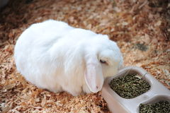 砍兔子 图库摄影