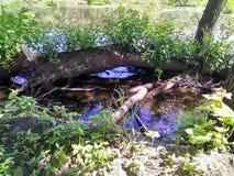 砍在沼泽的一棵树 库存照片