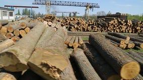 砍在锯木厂的doun树 股票视频