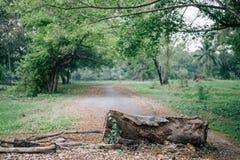 砍在结构树下 免版税图库摄影