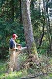 砍大结构树 免版税图库摄影