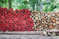 砍木红色自然日志的树 库存照片