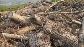 砍木头 影视素材