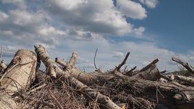 砍木头 股票录像