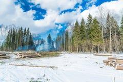 砍树在森林里 免版税库存照片