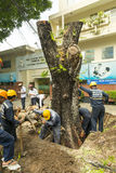 砍树在胡志明市在越南 库存照片