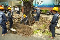 砍树在胡志明市在越南 免版税库存图片