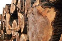 砍树 划分为的结构树 免版税库存照片