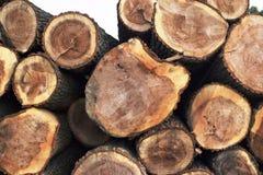 砍树 划分为的结构树 免版税库存图片
