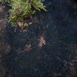 砍的树和青苔抽象背景  免版税库存照片
