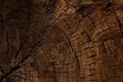 砍的树木纹理  免版税图库摄影