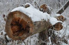 砍的树 图库摄影