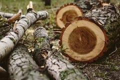 砍的树 免版税库存照片