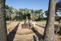 研的花生传统上在缅甸。 库存照片