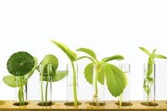 研究与开发植物新芽萃取物,用手 免版税库存图片