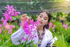 研究员年轻女人,佩带的白色礼服,检查兰花和记录变动改进兰花种类 免版税图库摄影