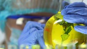 研究员有在黄色液体保存的绿色植物的标号烧瓶,特写镜头 影视素材