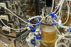 研究国际水平的生物工艺学的创新实验室 免版税库存照片