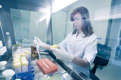研究在实验室里的生活科学家 库存图片