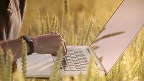 研究在麦田的膝上型计算机的农艺师 人手键入的膝上型计算机键盘 影视素材