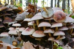 砖一束蘑菇关闭  图库摄影