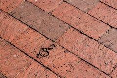 砖与某一音乐字符的步行方式 免版税库存照片