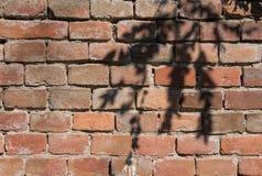 砖和枝杈纹理 库存照片