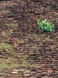 砖和树。 免版税图库摄影