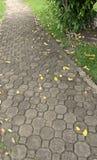 砖地板秋天的路和颜色 免版税库存照片