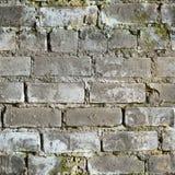 砖坏的发霉的无缝的纹理墙壁 免版税库存照片
