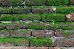 砖墙与草和mos的纹理背景 免版税库存照片