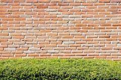 砖墙和树篱 免版税库存照片