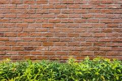 砖墙和树背景 免版税图库摄影