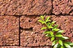 砖墙和树 库存图片