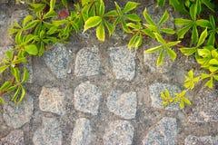 砖墙或篱芭用狂放的葡萄 过滤器 免版税库存照片