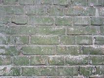 砖墙是与发白膏药的柔和的绿色在砖排之间 免版税库存照片