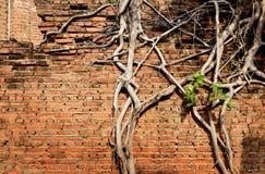 砖墙纹理和树 库存照片