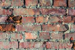 砖墙纹理背景 库存图片