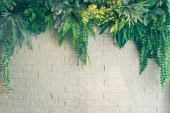 砖墙背景的人为绿色植物与拷贝空间 免版税库存图片