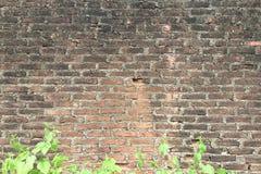 砖墙,有绿色的发霉的墙壁离开杂草 免版税库存照片