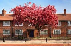 砖房子在伦敦 免版税库存图片