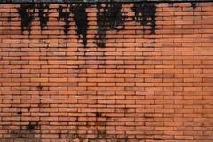砖棕色花前面庭院墙壁 库存照片